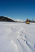 Alaska , Brooks Range. Iniakuk Lake Lodge. Wolf tracks frozen in the drift snow of Iniakuk Lake, deep in the Brooks Range.