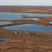 Sept 2009 Yamal Peninsula, Siberia, Russia - global warming impacts story on the Nenet people , reindeer herders in the Yamal Peninsula nenet camp