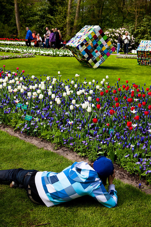 Blue-square photographer photographing a cub. People at the Keukenhof tulip and flower show in Lisse, Holland - Netherlands Editorial Use only.