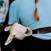 Hill farmer Sylvia Binnington hand clips her sheep, Nidderdale, North Yorkshire, UK