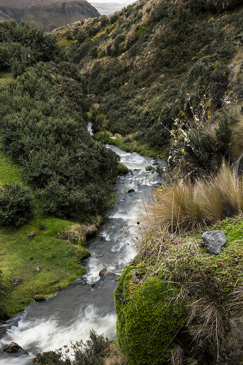 Cosanga River<br /> Antisana Ecological Reserve<br /> Cordillera Real, Andes<br /> ECUADOR, South America