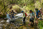 Hikers wade across Tapeats Creek in Grand Canyon Grand Canyon National Park, Arizona, USA. Starting at River Mile 134.5, a portion of our party disembarked rafts for a hike one way up beautiful Tapeats Creek Trail to the wondrous Thunder Spring and River, across remote Surprise Valley Trail, then down Deer Creek Trail to meet others of our group at The Patio and Deer Creek Falls at River Mile 136.9. This scenic one-way traverse was 8 miles with 2300 feet gain (measured by my smartphone GPS app). Day 10 of 16 days rafting 226 miles down the Colorado River in Grand Canyon National Park. For this photo's licensing options, please inquire at PhotoSeek.com. .