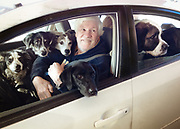 A man with six dogs in his car goes through the drive thru at the Whitefish Credit Union in Thompson Falls, Montana