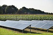 Nederland, Overloon, 27-8-2014Op het land van een boer, staat een kleine elektriciteitscentrale van zonnepanelen.FOTO: FLIP FRANSSEN/ HOLLANDSE HOOGTE