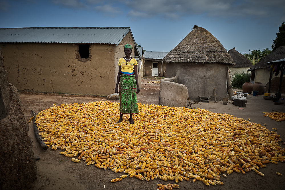 29/10/2019 / Kpatua / Ghana:<br /> Cecilia dries her corn after a very successful farming season. This new variety of corn matures earlier than the regular corn she used to plant.<br /> In the dry season, she farms vegetable on a patch of land near the solar powered water pump donated by Oxfam.