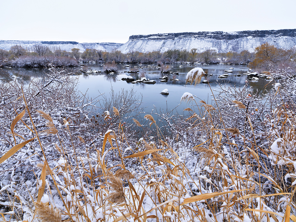 Licensing - Open Edition Prints<br /> River rushes draped in snow along the Snake River near Niagra Springs south of Wendell Idaho in winter
