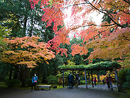 The Portland Japanese Garden with fall colors