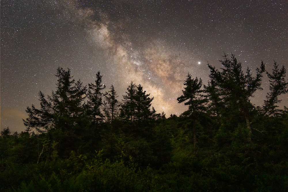The Milky Way makes it's presence known above the dark and towering pines among the primeval lush vegetation of the Cranberry Glades