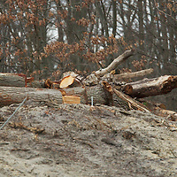 (PMONMOUTH)  Howell Twp 3/27/2004   Trees and stumps lie in a cleared lot near the parking lot of Chestnut Point of Manasquan Reservior.   Michael J. Treola Staff Photographer