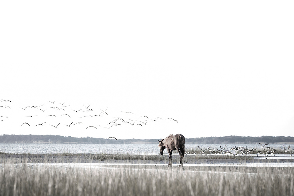 """""""One road leads home and a thousand roads lead into the wildness""""  ~ C.S. Lewis<br /> <br /> Tracie Spence's fine art photography series of The Spanish Wild Mustangs."""