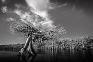 Florida Black & White Landscapes Part 1