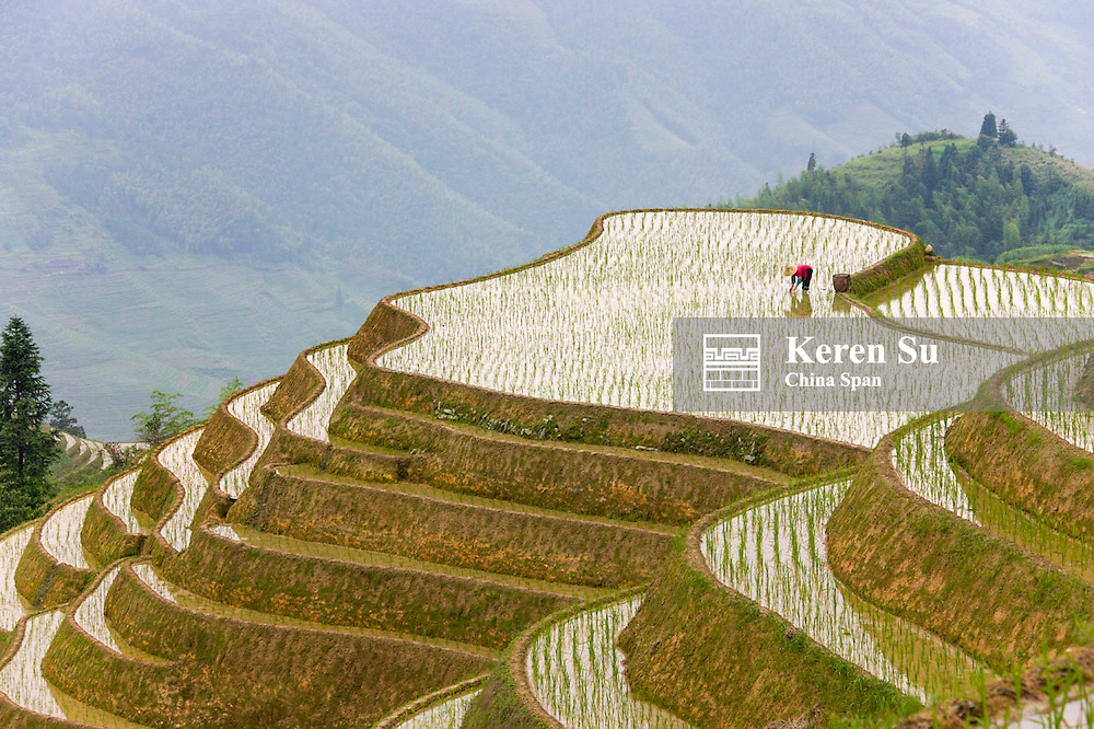 Zhuang woman farming on rice terraces in the mountain, Longji Rice Terraces, Longsheng, Guangxi, China