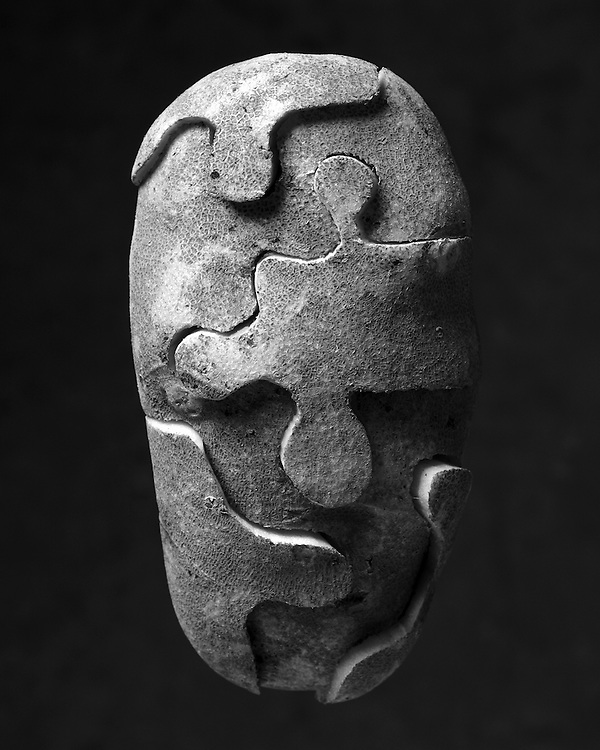 Edition of 75 includes all sizes<br /> Potato Still Life - B&W Puzzled Potato. First images in the Potato Series
