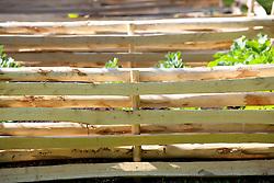 Chestnut hurdles in the veg patch