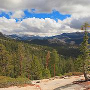 Jeffrey Pine At Clouds Rest - Yosemite