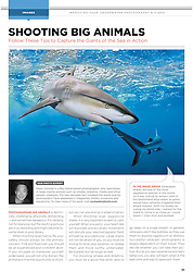 """Sport Diver Magazine, January / February 2012, """"Shooting Big Animals"""" feature, editorial use, USA, Image ID:"""