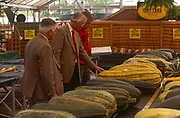 Judges measure giant marrows at the annual Vegetable Olympics, on 30th September 1994, at Spalding, Lincolnshire, England. Sponsored by Garden News Magazine and hosted by a nursery owner, these vegetables have their growth accelerated by special fertilizers and genetic hormones.