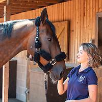 Lyne House Livery Stock - British Equestrian
