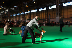 © Licensed to London News Pictures. 09/03/2017. Dog owners with their dogs in competition on the first day of Crufts, the world's largest dog show. The annual event is organised and hosted by the Kennel Club and has been running since 1891. Birmingham, UK. Photo credit: Ray Tang/LNP