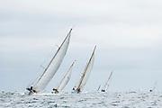 Black Watch sailing in the Opera House Cup regatta.