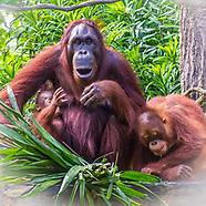 Day 5 Singapore Zoo-River Safari