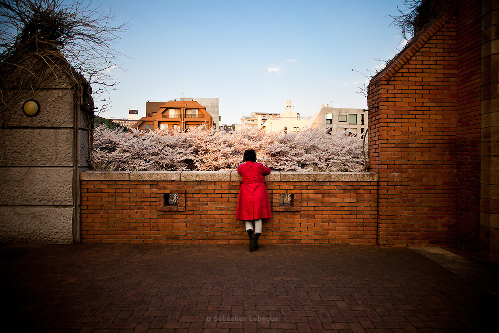 TOKYO, JAPAN, 9 APRIL  - Nakameguro - a woman with a red coat watch the sakura cherry blossom on the meguro river - April 2012
