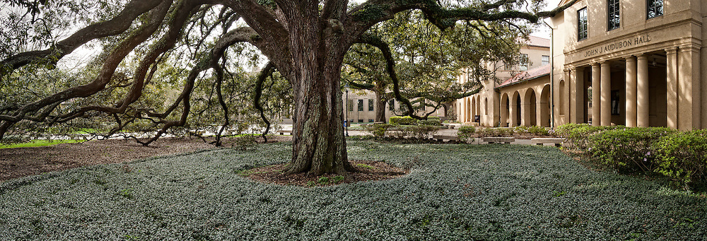 The LSU quadrangle is the heart of the campus and is a popular gathering place for students.