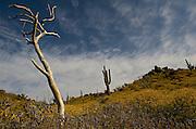 Desert in Spring - Phoenix - Arizona