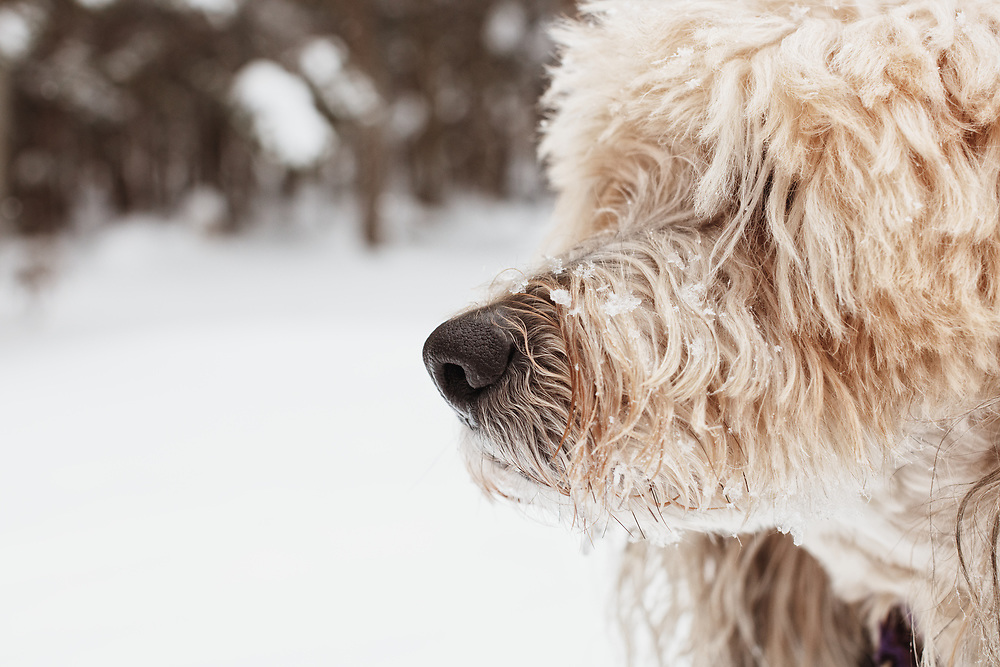 Fluffy mixed breed dog in the snow