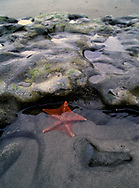 Starfish in a tidal pool at Point Reyes National Seashore.