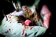 """A sacrificial chicken heart wrapped in a banana leaf before being """"fed"""" to a sacred skull in an ancient Naga ritual."""