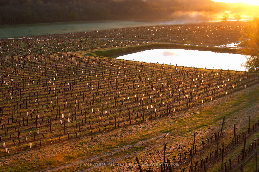 vineyard pond in early morning chateau pey la tour bordeaux france