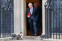 © Licensed to London News Pictures. 10/01/2017. London, UK. Foreign Secretary BORIS JOHNSON attends a cabinet meeting whilst Larry the Downing Street Cat waiting outside in Downing Street on Tuesday, 10 January 2017. Photo credit: Tolga Akmen/LNP