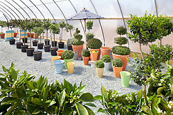 Cultivated_Garden Topiary greenhouse