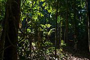 In the Amazon rainforest close to Cristalino River.