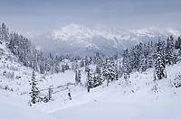 North Cascades after fresh snowfall, seen from Heather Meadows Recreation Area, Washington