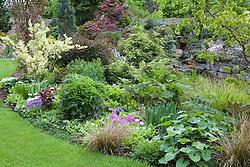 Border in May. Variegated shrub is Forsythia x intermedia 'Yosefa'