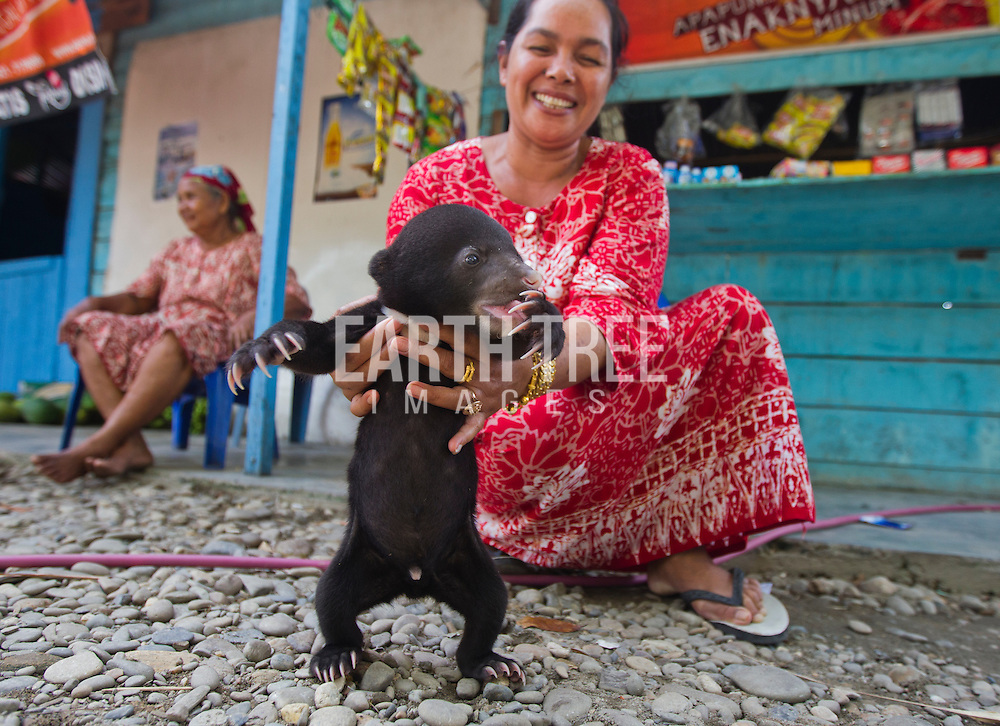 """The wife of a wildlife traders show tourist a captive orphaned sun bear with offers to sell. The reclusive sun bear, smallest member of the bear family, lives an insular life in the dense lowland forests of Southeast Asia. Found from southern China to eastern India and as far south as Indonesia. Photo"""" Paul Hilton / Earth Tree ( no resales, no archives, one time use only )"""