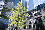 A healthy tree thrives in its urban habitat, surrounded by corporate office buildings and the architecture of modernity, a sign of growth and properity, on 21st October 2021, in London, England.