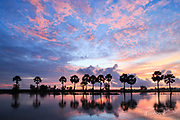 Colorful sunrise landscape with silhouettes of palm trees on Chau Doc city, Vietnam. Chaudoc city near Cambodia is famous location of the Mekong river tours.