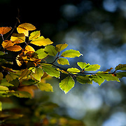 Leaves with sunlight and autumn colors