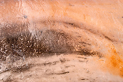 Buffalo foot prints run through the algae mat of a Yellowstone hot spring run-off.