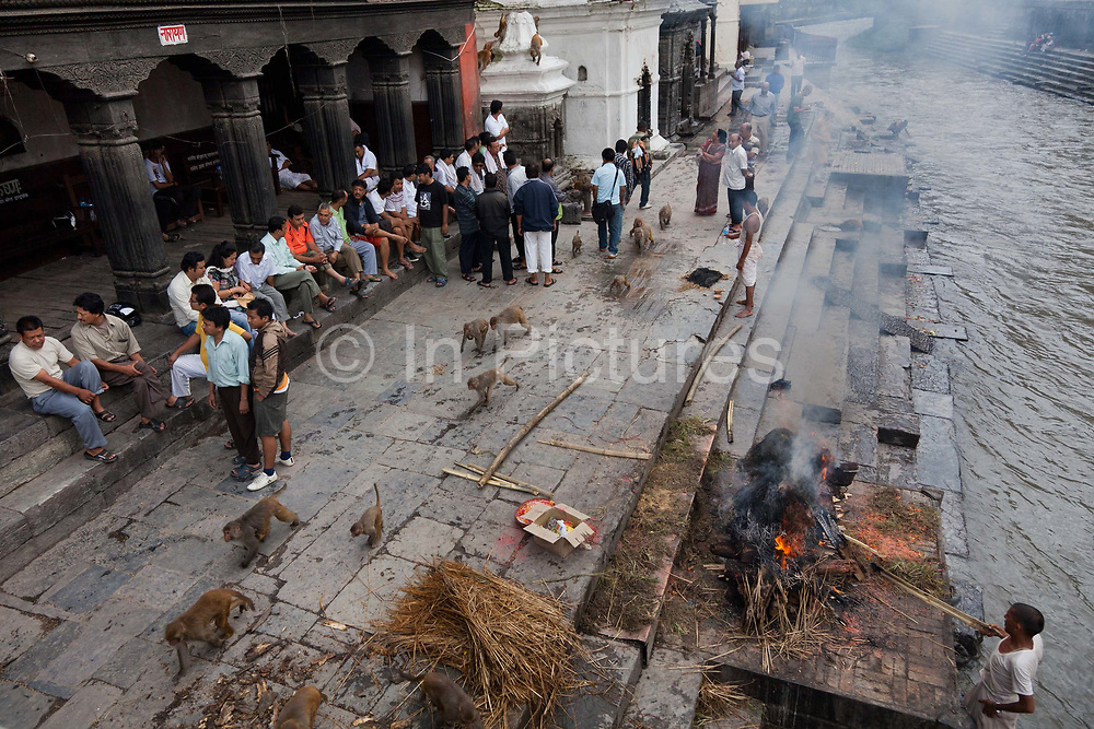 An old man is cremated, his sons lit the fire and the fire is tended to by funeral service men. Monkeys are running past returning to the forrest after having feasted on donated food in the temple all morning. To burn a body fully takes an estimated 4 hours and hundreds of kilo of wood using butter as fuel. According to Hindu religion and traditions the dead must be burned. Along the Bagmati River next to the Pashupatinath Temple complex are ten alocated spaces for cremation and all day funerals are being held. The bodies are cremated according to custom and the ashes and remains are swept into the holy waters. The Bagmati runs into the Ganges further South and is considered equally holy to Hindus.