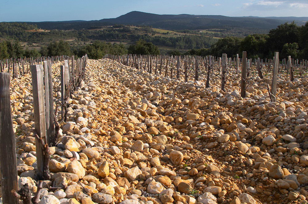 Domaine Saint Sylvestre in Puechabon. Terrasses de Larzac. Languedoc. Vines trained in Gobelet pruning. Young Mourvedre grape vine variety. Terroir soil. France. Europe. Vineyard. Soil with stones rocks. Galets.
