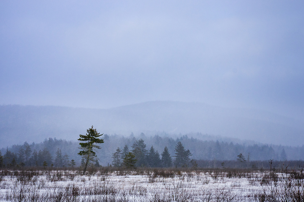 Snow falls on the distant hills surrounding Cranberry Glades of West Virginia looking out across the field of stick figures leading to the ethereal evergreen pines standing in contrast to the stark elements of winter.