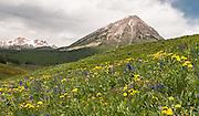 Colorado Alpine Array