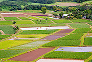The taro fields in Hanalei Valley on the island of Kauai, Hawaii.