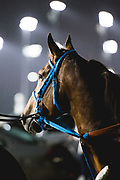 November 1-3, 2018: Breeders' Cup Horse Racing World Championships. Gunnevera