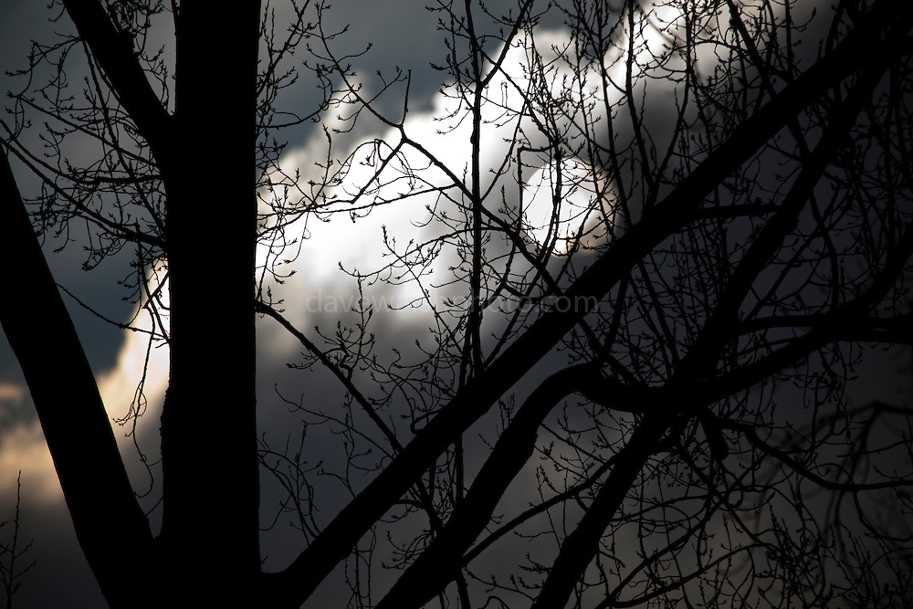 The sun pushes through the winter clouds and bare trees to light up the Vondelpark, Amsterdam
