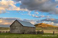 Old ranch barn and Harsin Butte on the Nature Conservancy's Zumwalt Prairie Preserve near Enterprise, Oregon, USA